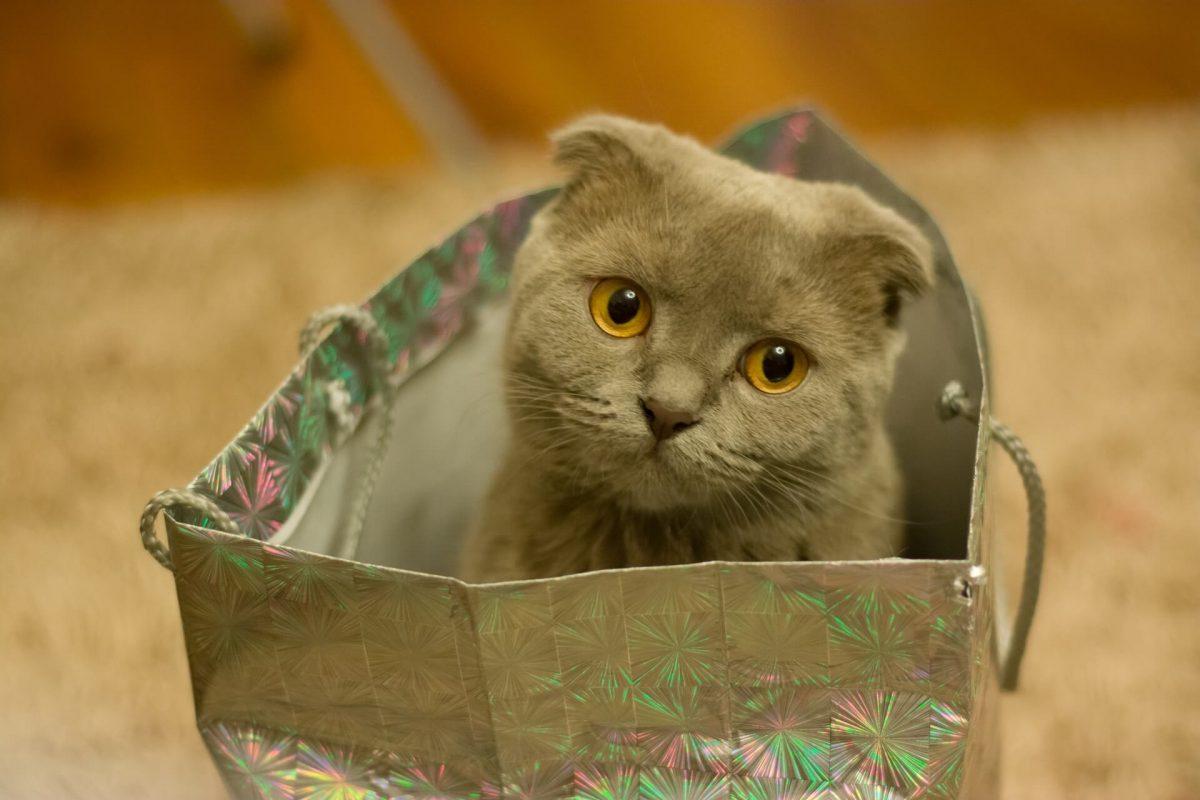Cuccia Gatto Fai Da Te quale cuccia scegliere per il nostro gatto? - petvalley
