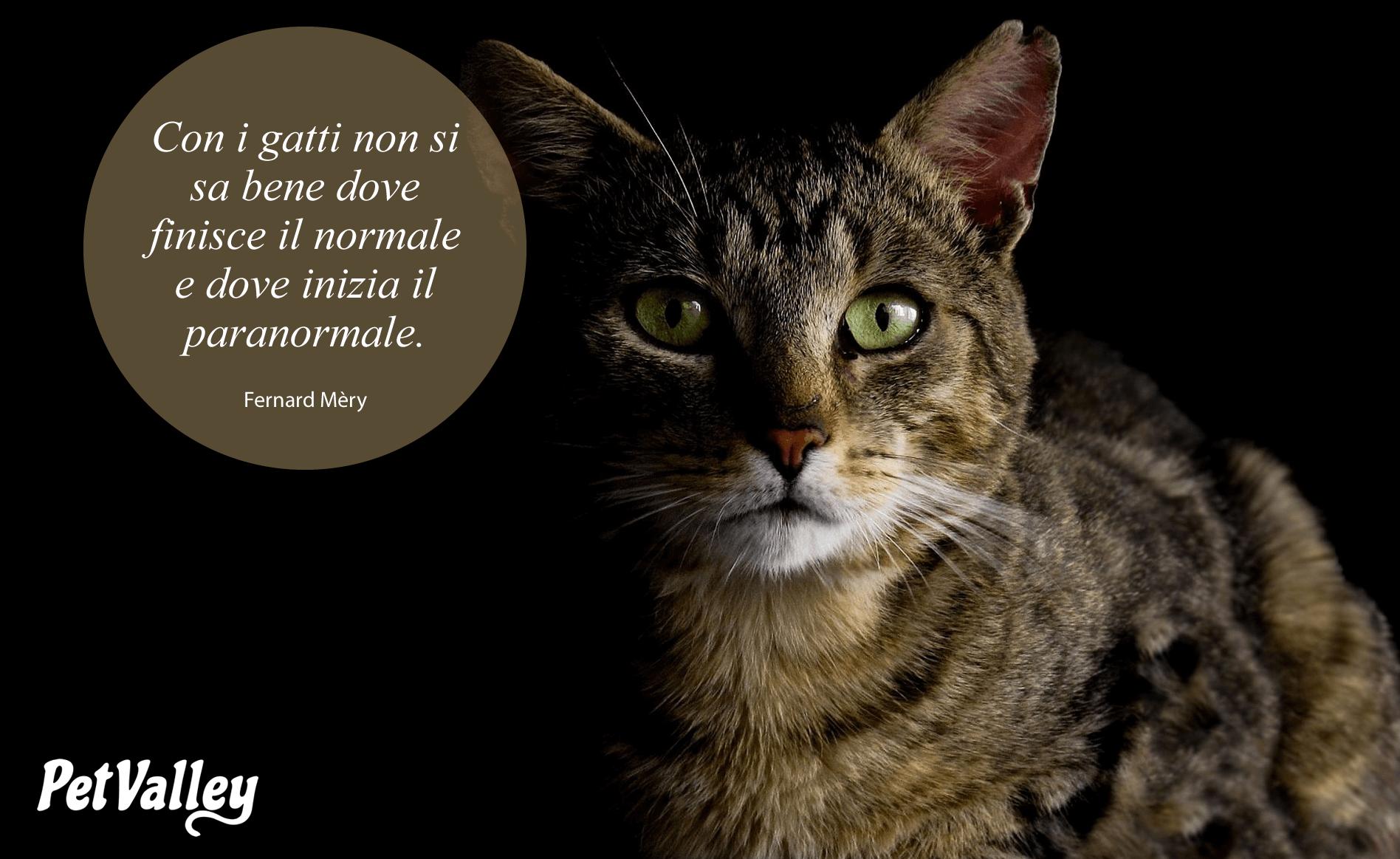 Con i gatti non si sa bene dove finisce il normale e