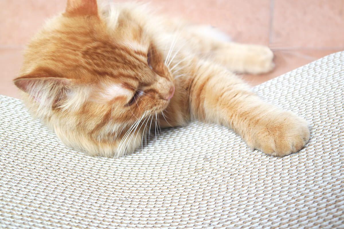 Costruire Cuccia Per Gatti le migliori creazioni in cartone per gatti - petvalley