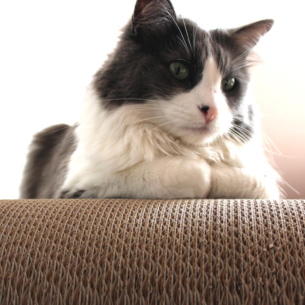 Tiragraffi di design di cartone per gatti