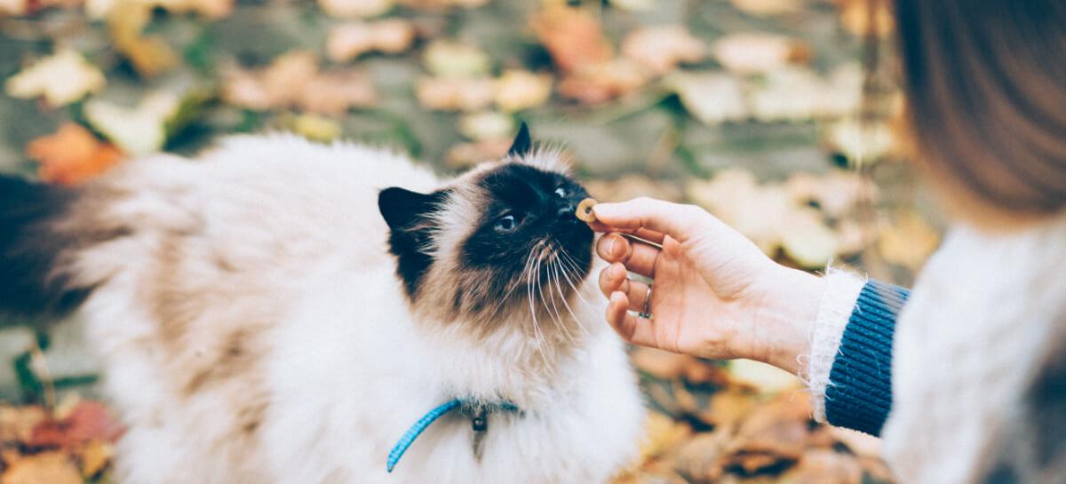Cosa rappresentiamo per il nostro gatto?